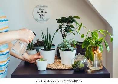Close up young woman watering plant in her home gardening corner. Various green air plants, bonsai tree, succulents in pots on the black table. Beige wall background with an inspirational phrase