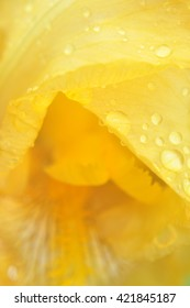 close-ap yellow flower