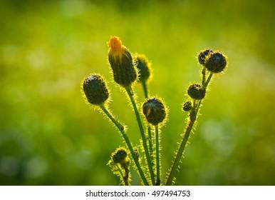 Closed flowers in green field
