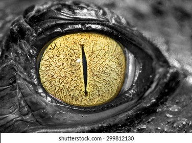 Closed up image of crocodile eye