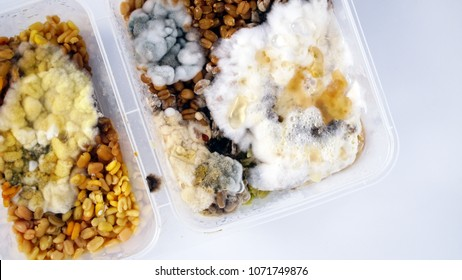 Closed up moldy food in plastic box container