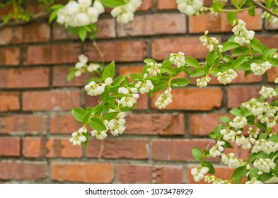 Little White Bell Shaped Flowers Images Stock Photos Vectors