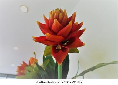 closed up red plastic flower, orange tulip