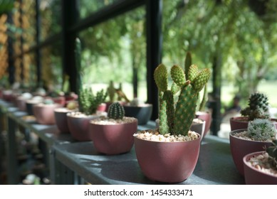 Closed up of tiny succulent plants in clay pot decorate in the restaurant