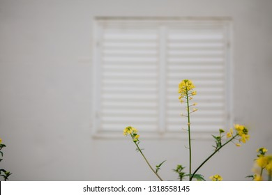 Closed white window blind of a country house with yellow flowers in the front, copy space for a flyer / poster