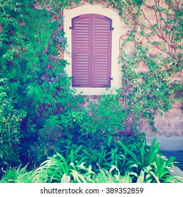 Closed Window on the Facade of a Stone House Decorated with Bindweed in Tel Aviv, Israel, Instagram Effect