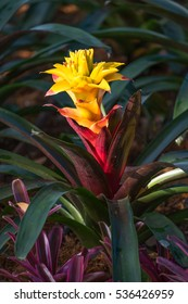 closed up of yellow Bromeliad flower