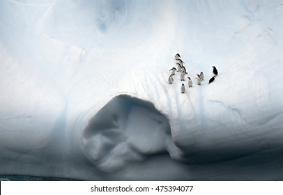 Closer look to the penguins on the iceberg in the Drake passage