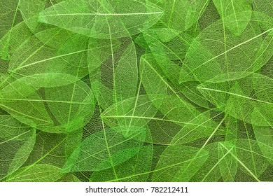 Close-up abstract green transparent painted leaves on wall texture background