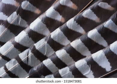 Close-up of abstract pattern of kestrel falcon feathers as background. The texture of the wing feathers of the falcon.