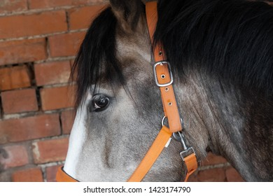Close-up, abstract view of a thorough bred racehorse showing this stallions facial details. Seen in his brick built, stable block prior to training.