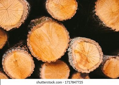 Closeup of abstract wooden background. Fresh cut pine logs at wood production factory. Woodpile of chopped tree trunks. Processing of timber material at sawmill. Lumber mill, forestry, wood storage