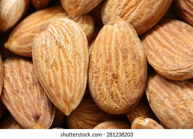 close-up almond seed on the tree branch