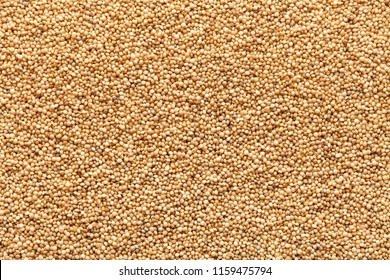 closeup amaranth seeds organic food background