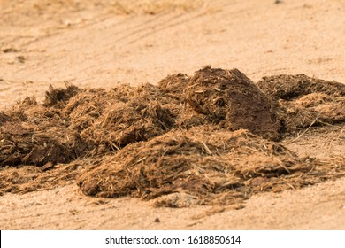 closeup of animal manure, droppings, or dung, probably from a rhino or elephant in the wild of Kruger national park, South Africa