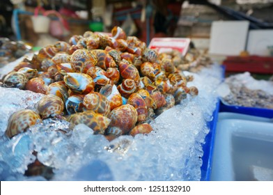 Closeup of areola babylon or spotted babylon on ice in asia market, fresh delicious seafood for cooking meal or dinner