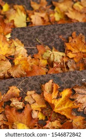 The close-up of autumn leaves lying on the stairs.