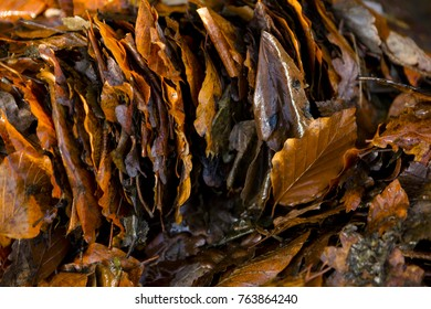 Closeup of Autumnal leaves stacked up side by side with one odd leaf on its own