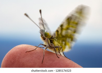 Closeup of a baby butterfly sitting on a finger