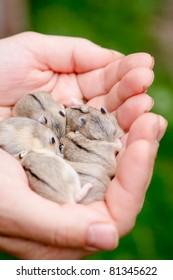 Hamster Baby Images, Stock Photos & Vectors | Shutterstock