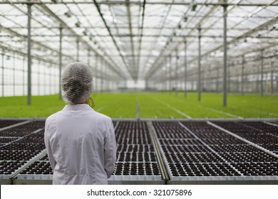 Close-up back biotechnology woman engineer examining a plants for disease from greenhouse