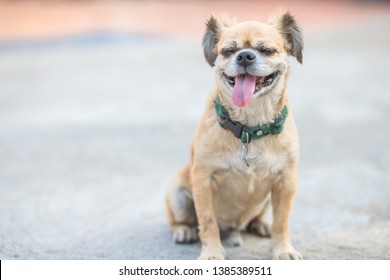 Dog Gallery Images Stock Photos Vectors Shutterstock