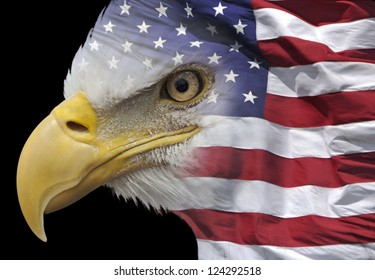 closeup of a bald eagle combined with US flag