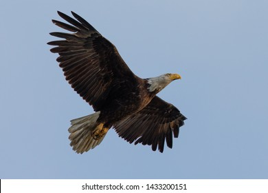 Eagle Fly Images, Stock Photos & Vectors | Shutterstock