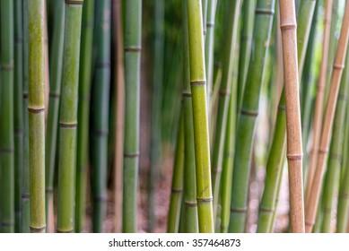 Close-up bamboo / bamboo