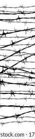 close-up of barbed wire; isolated on white ground