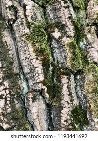 Closeup of the bark texture of a tree trunk covered in moss.
