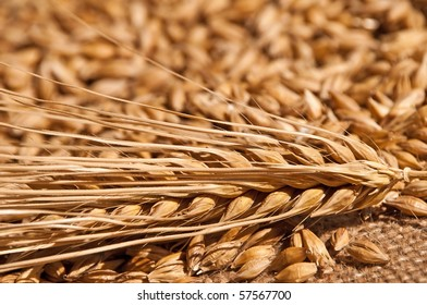 closeup of barley
