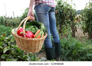 Closeup of basket full of fresh vegetables