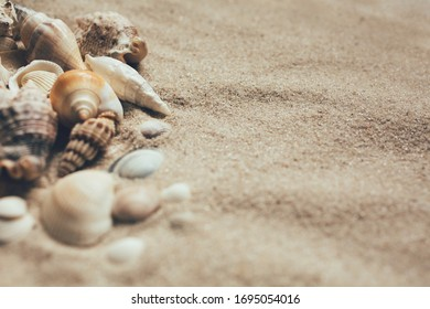 Closeup of beach sand with lots of sea shells. Close up. Place for text.