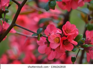Closeup of a beautiful blooming pink flower in a spring day