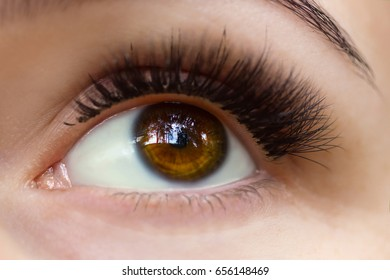 Closeup of a beautiful brown eye with forest reflection