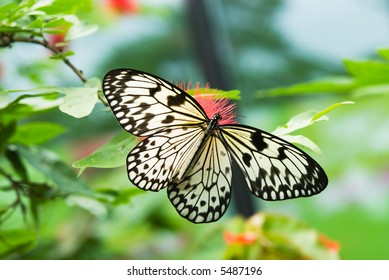 close-up of a beautiful butterfly