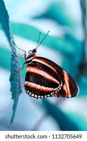 Closeup  beautiful butterfly  & flower in the garden.