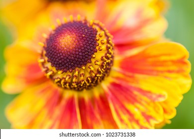 Closeup of a beautiful colorfull flower