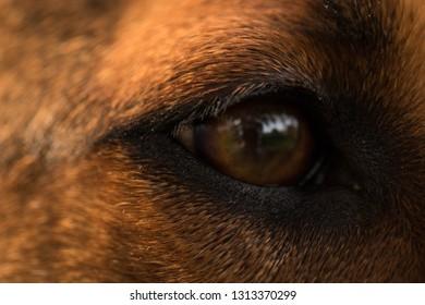 Closeup of a beautiful dog's eye