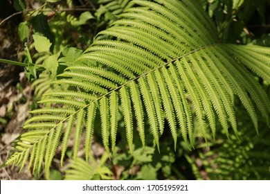 Close-up of beautiful fern leaves and green plants on a dark and lush background.