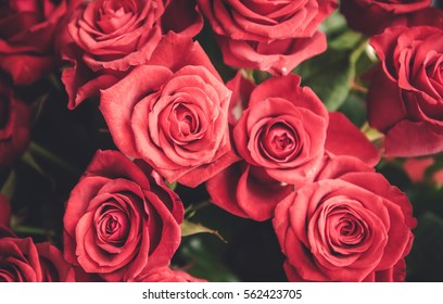 Closeup of beautiful freshly cut red roses bouquet