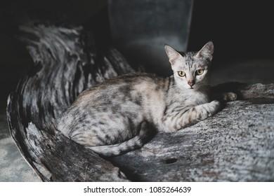 Closeup of beautiful gray cat with yellow eyes