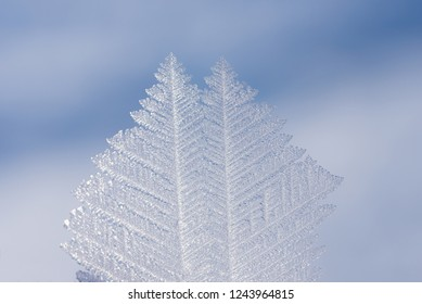 closeup of a beautiful hoarfrost crystal ice flake, soft winter background. selective focus