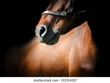 Close-up beautiful horse head isolated on black background