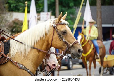 Close-up of beautiful Horse in local parade