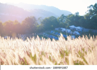 Close-up of beautiful meadow  grass flowers in the mountain with sunset blue sky view landscape.