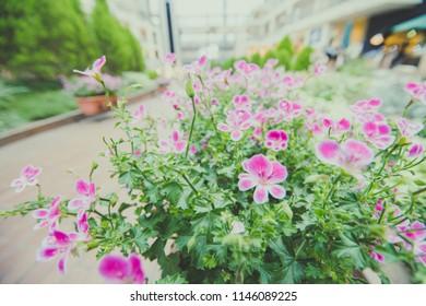 Closeup beautiful pink flower