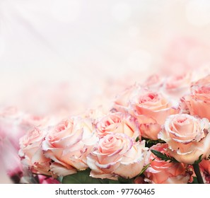 Closeup of beautiful pink roses in the garden