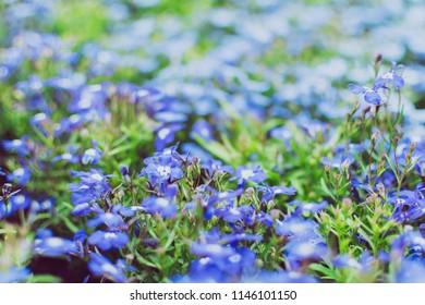 Closeup beautiful purple flower